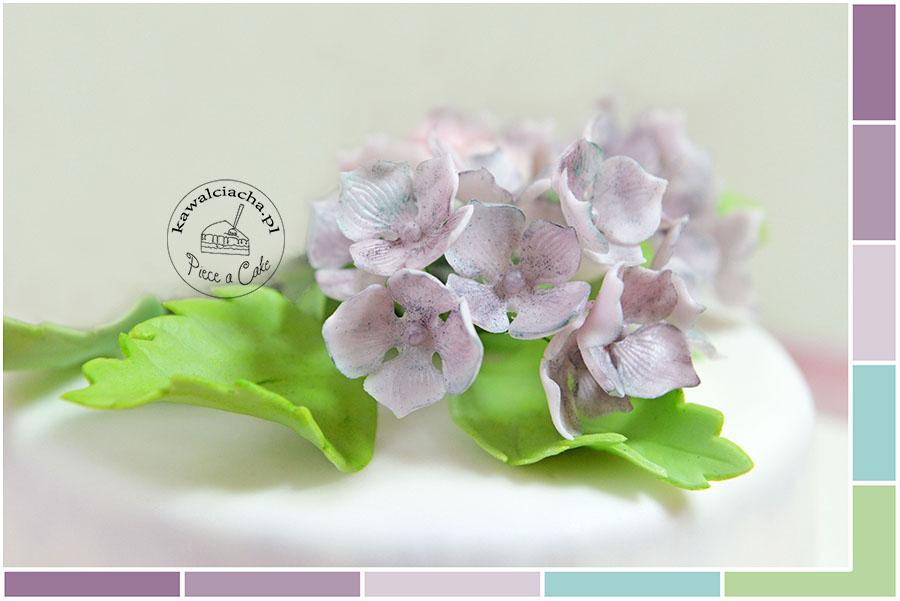 kolory cukrowych hortensji