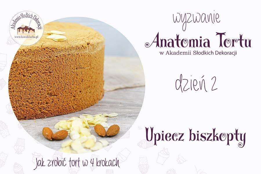 Anatomia tortu - wszystko o biszkoptach