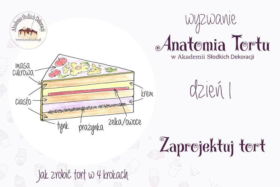 Anatomia tortu - projekt to podstawa