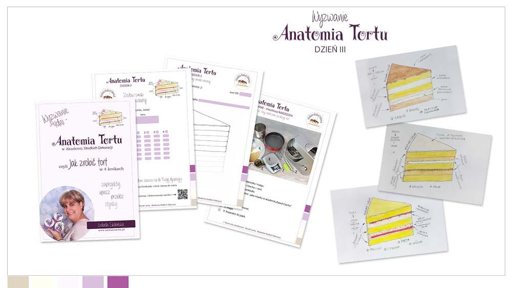 Obrazek: Workbook Anantomia Tortu cz.3